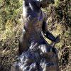 Bobbie Carlyle Self Made Man 10.5ft Exposures International