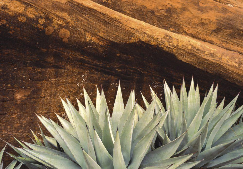 Long Canyon - SD0908   Tom Johnson   Photography-Exposures International Gallery of Fine Art - Sedona AZ