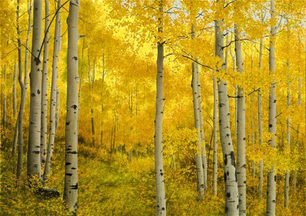 Alone with the Aspens | Alexander Volkov | Painting-Exposures International Gallery of Fine Art - Sedona AZ